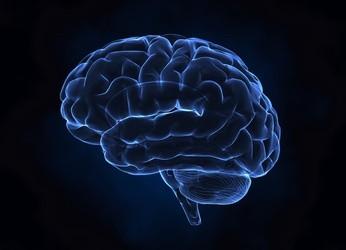 Cerveau-Santé au travail
